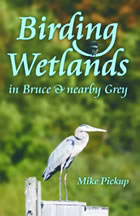 Birding Wetlands of Bruce & nearby Grey